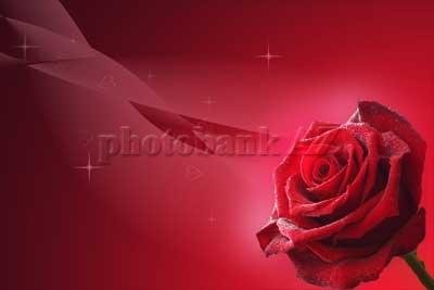 postcard red rose